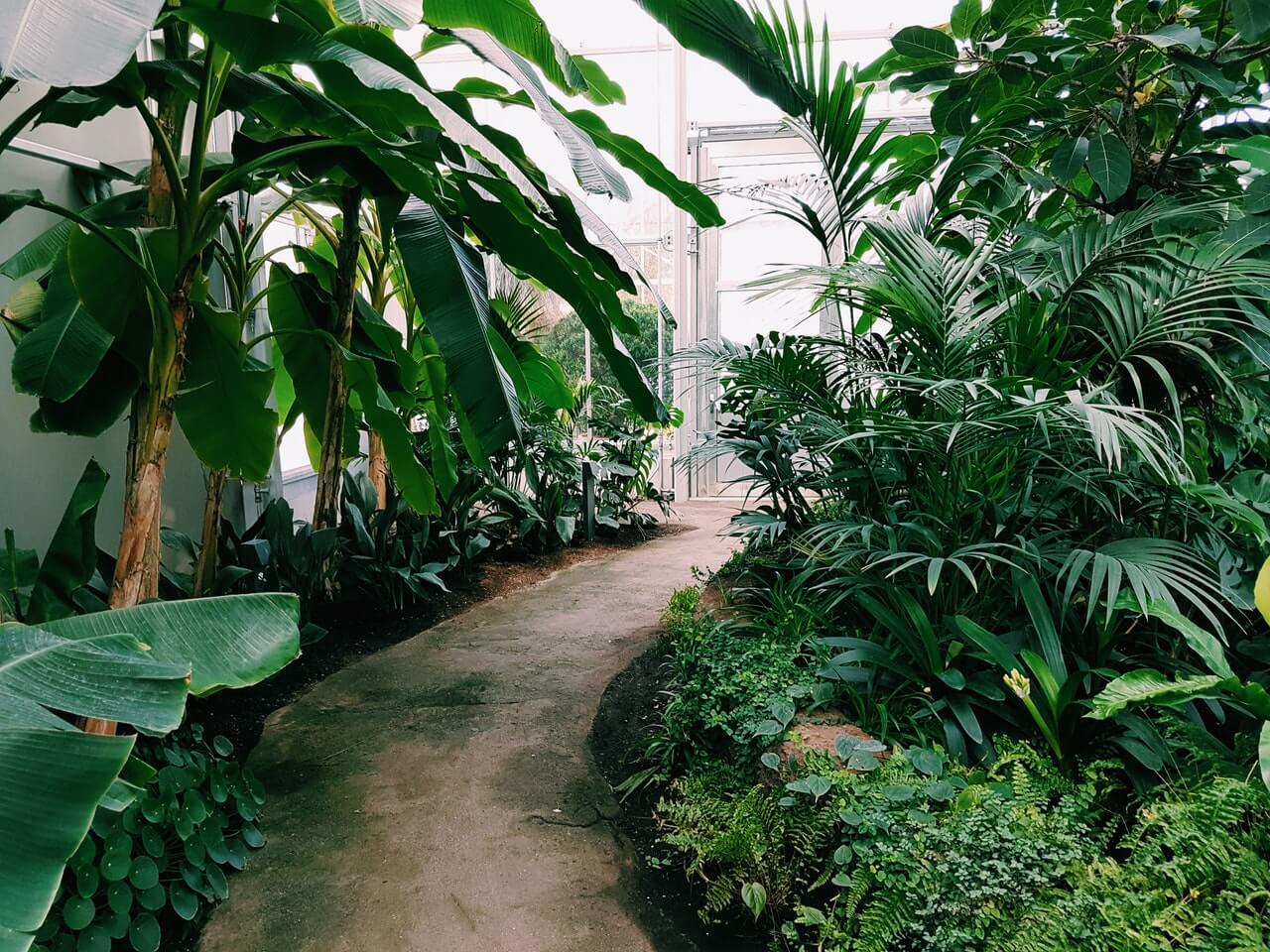 photography of pathway surrounded by plants 1