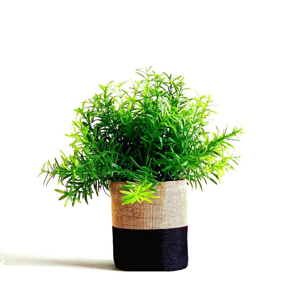 indoor-plant-secculant