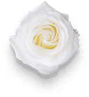 flower-01-free-img